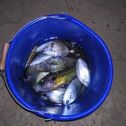 Résultat de 8h de pêche difficile 26/04